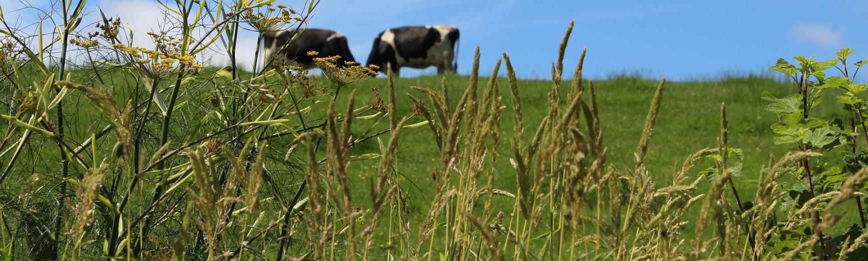 meadow 2503453