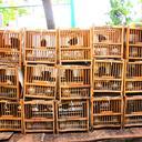 birds 4945927
